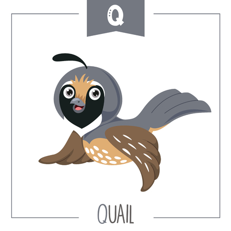 Vector Illustration Of Alphabet Letter Q And Quail