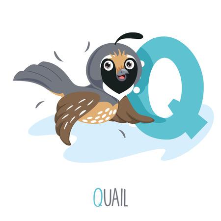 Illustration vectorielle de la lettre de l'alphabet Q et de la caille