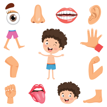 Body Parts Cartoon Stock Photos And Images - 123RF