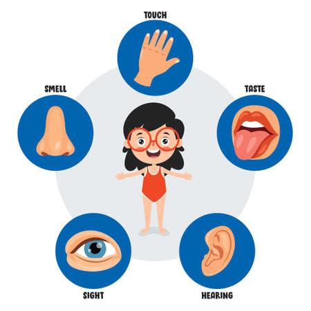 Five Senses Concept With Human Organs