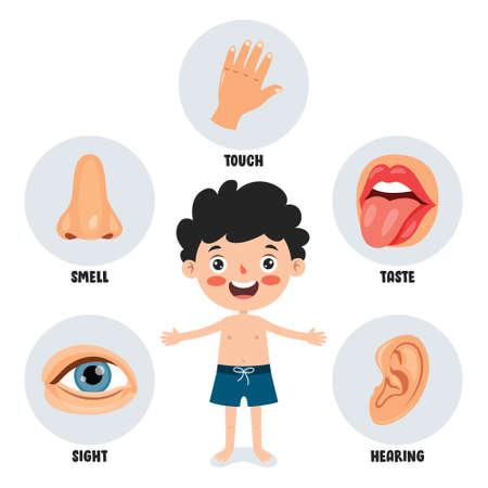 Five Senses Concept With Human Organs 矢量图片
