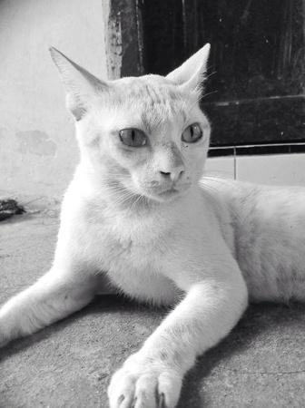 white: White cat Stock Photo