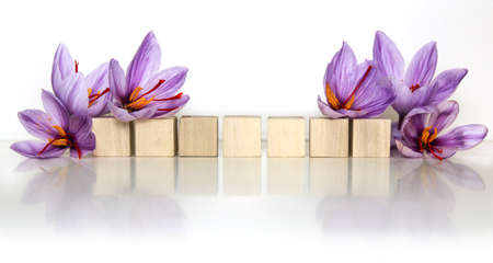 Saffron flowers. Stock Photo
