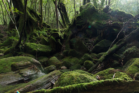 green environment: The MOSS forest