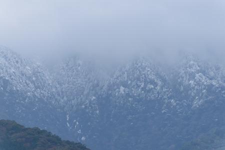 remnant: Remnant snow forest