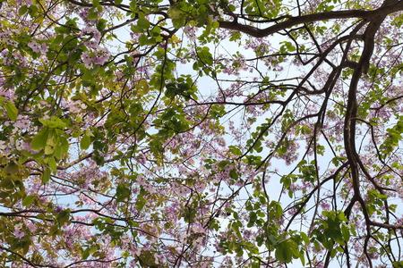japanese garden: flower