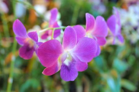 beatiful: orchid blur beatiful blur Stock Photo