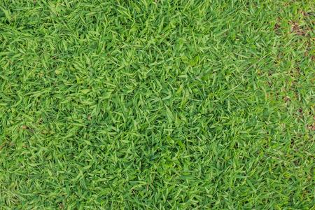 top view grass