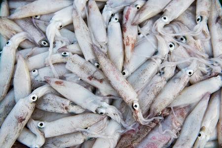 Closeup fresh squid on the market