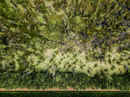 Aerial view on the forest and swamp. Empty road in a forest from a drone. Beautiful natural landscape at the summer time.