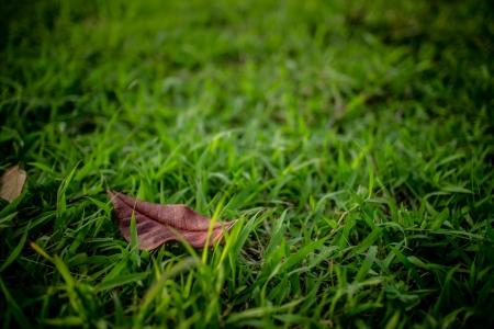 잔디밭에 나뭇잎