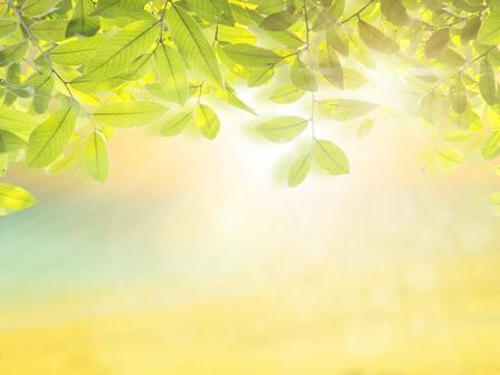 limetree: Blurred nature background