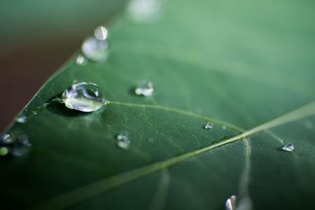 dew drop: dew drop Stock Photo