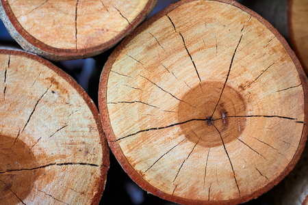 Wood texture. Fresh cut tree top view close-up Stock Photo