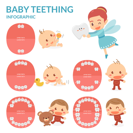 shedding: Baby Teething. Tooth Fairy. Period of eruption and shedding of babys teeth. Grown up. Illustration