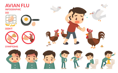 Avian flu infographic. Sickness.