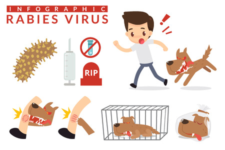 Rabies cartoon infographic. Infographic.  イラスト・ベクター素材