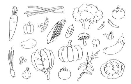 Cute doodle vegetable cartoon icons and objects.