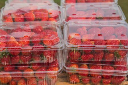 Strawberries live in plastic boxes. Archivio Fotografico