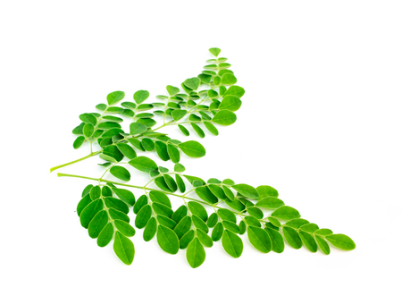 Moringa leaves, kelor isolated on white background. Stock Photo - 106510470