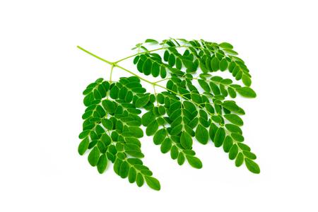 Moringa leaves isolated on white background