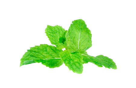 Fresh spearmint lisolated on the white background. Stock Photo