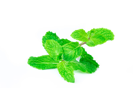 Fresh spearmint lisolated on white background.