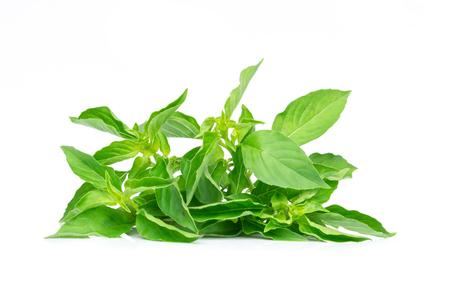 Ocimum basilicum of harig basilicumblad dat op witte bacgkround wordt geïsoleerd.