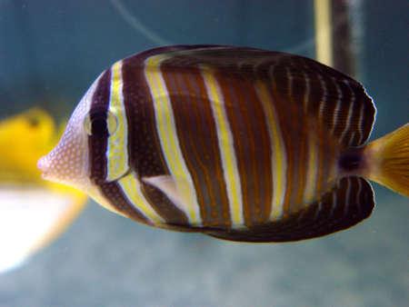 Tropical Fish Stock Photo - 621250