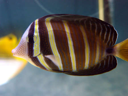 corall:  Tropical Fish