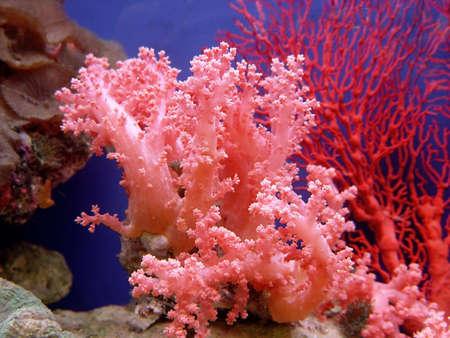 polyps: Beautiful coral                                Stock Photo