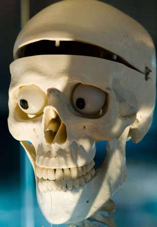 nightmarish: Anatomically medical model of the human skull