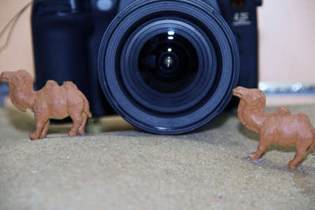 camera lens and camel model on the sand photo