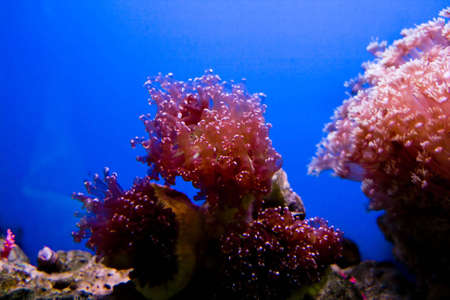 polyps: Beautiful coral in a sea aquarium