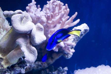coral colony: Coral colonia di corallo e pesce in un acquario mare