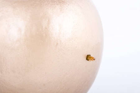 golden apple and worm on white background Stock Photo - 4551488
