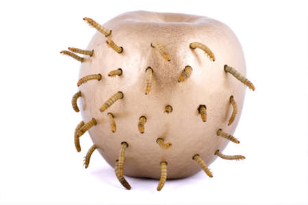 golden apple and worm on white background Stock Photo - 4551485