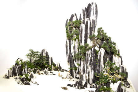 Bonsai at the miniature rocks, like traditional Chinese painting  photo