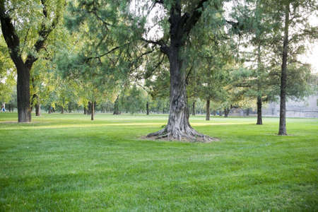 Calm beautiful lawn with trees in park photo