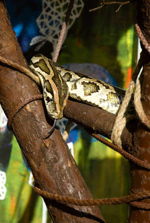 lingua: python Stock Photo