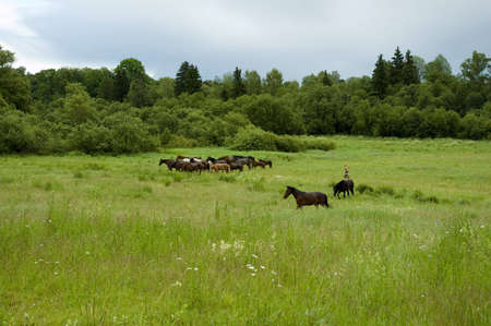 horse Stock Photo - 3235411