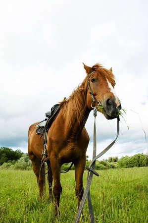 deportment: horse