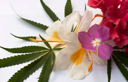Cannabis Stock Photo - 7389711