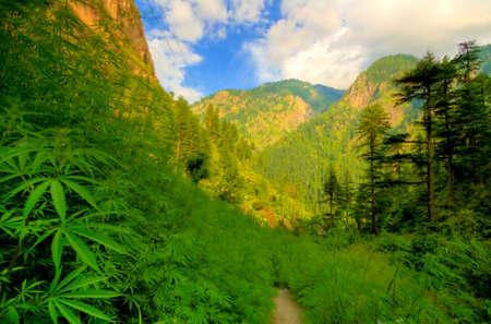 hanf: Parvati Valley, Nordindien Lizenzfreie Bilder
