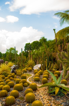 Exotic botanical garden in the North of  Thailand photo