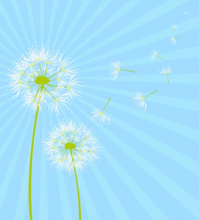 dandelion  Stock Vector - 15168952