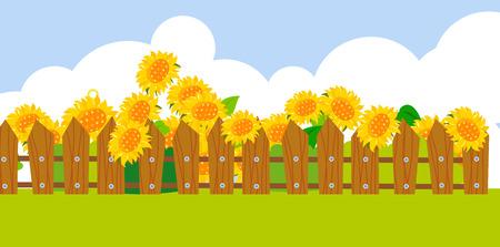 spring bed: Sunflower