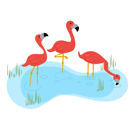 Three flamingos standing in the water Vector