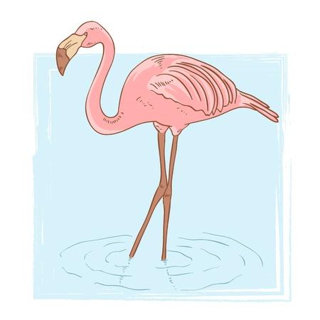 flamenco ave: Pink flamingo de pie en el agua en el fondo aislado