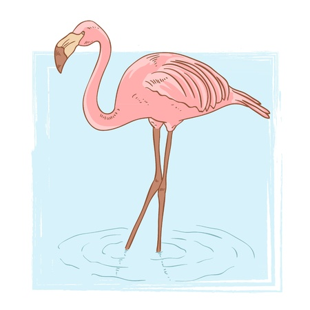 pink flamingo: Pink flamingo standing in the water on isolated background Illustration